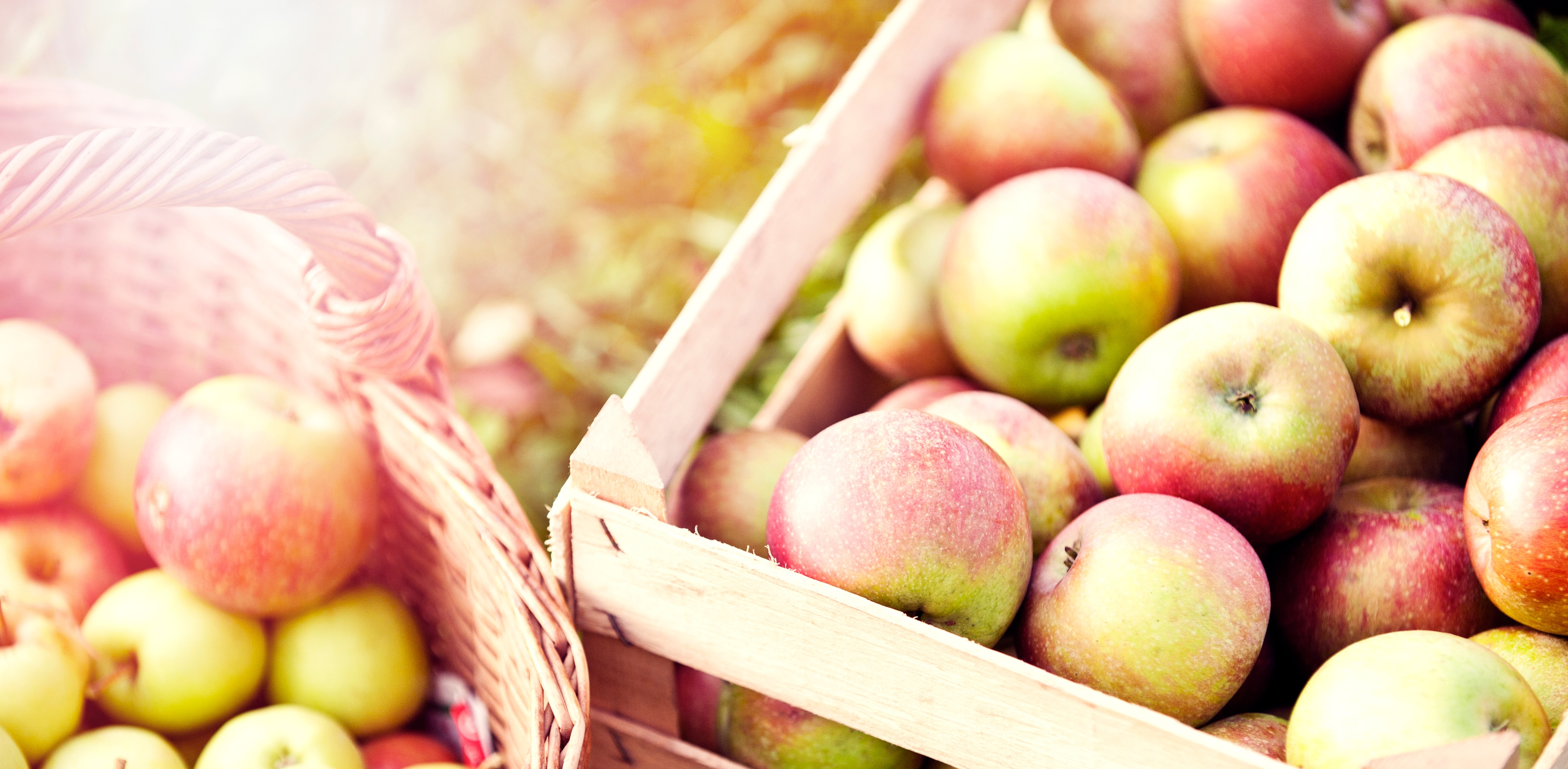 Apples-in-a-wooden-box-508588838_4256x2088.jpeg