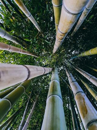 Nurturing a healthy business is like growing a Chinese Bamboo tree