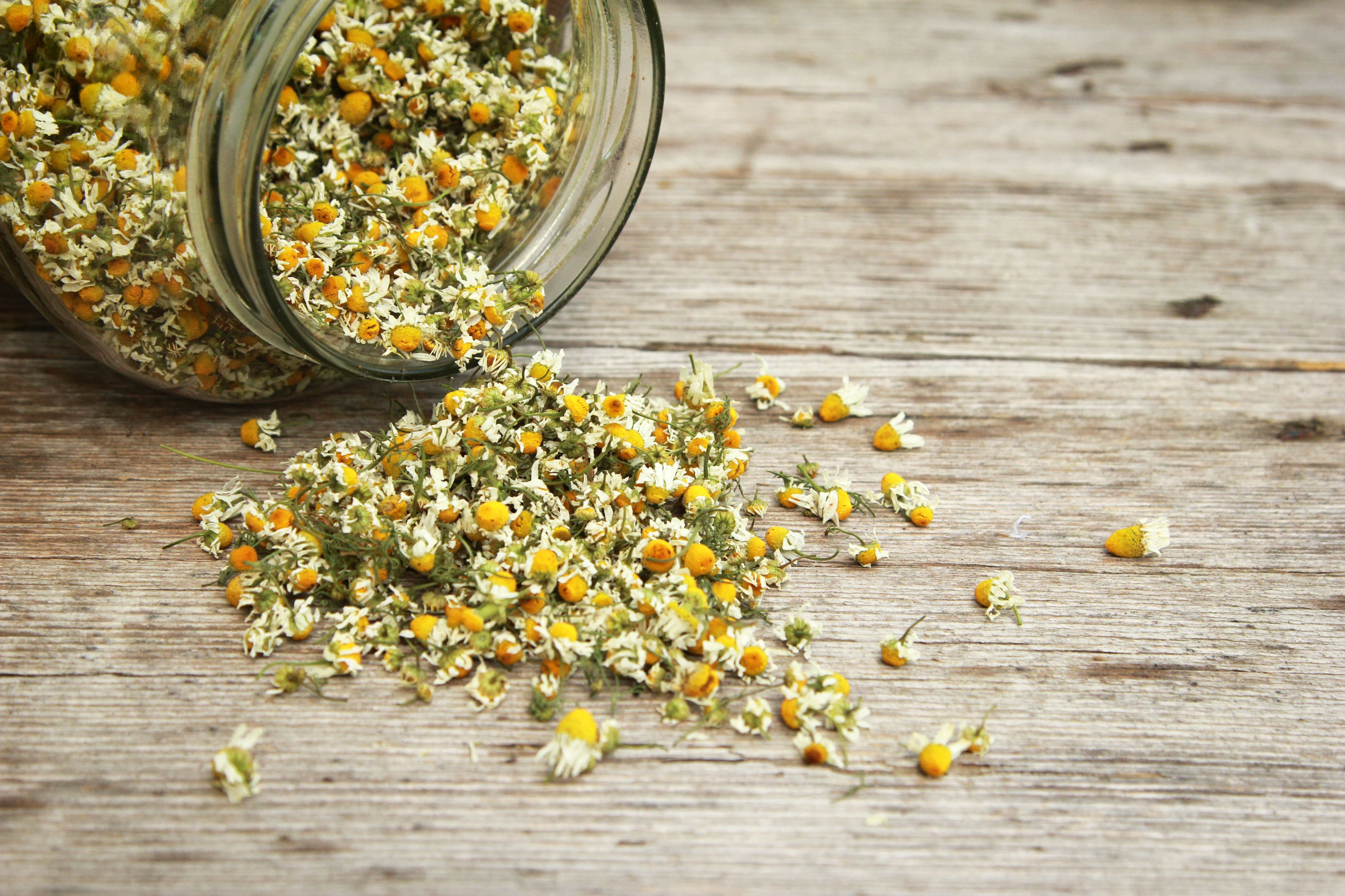 Chamomile for calming and relaxing