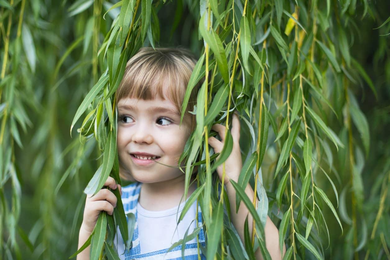 Child peeking through a Weeping Willow