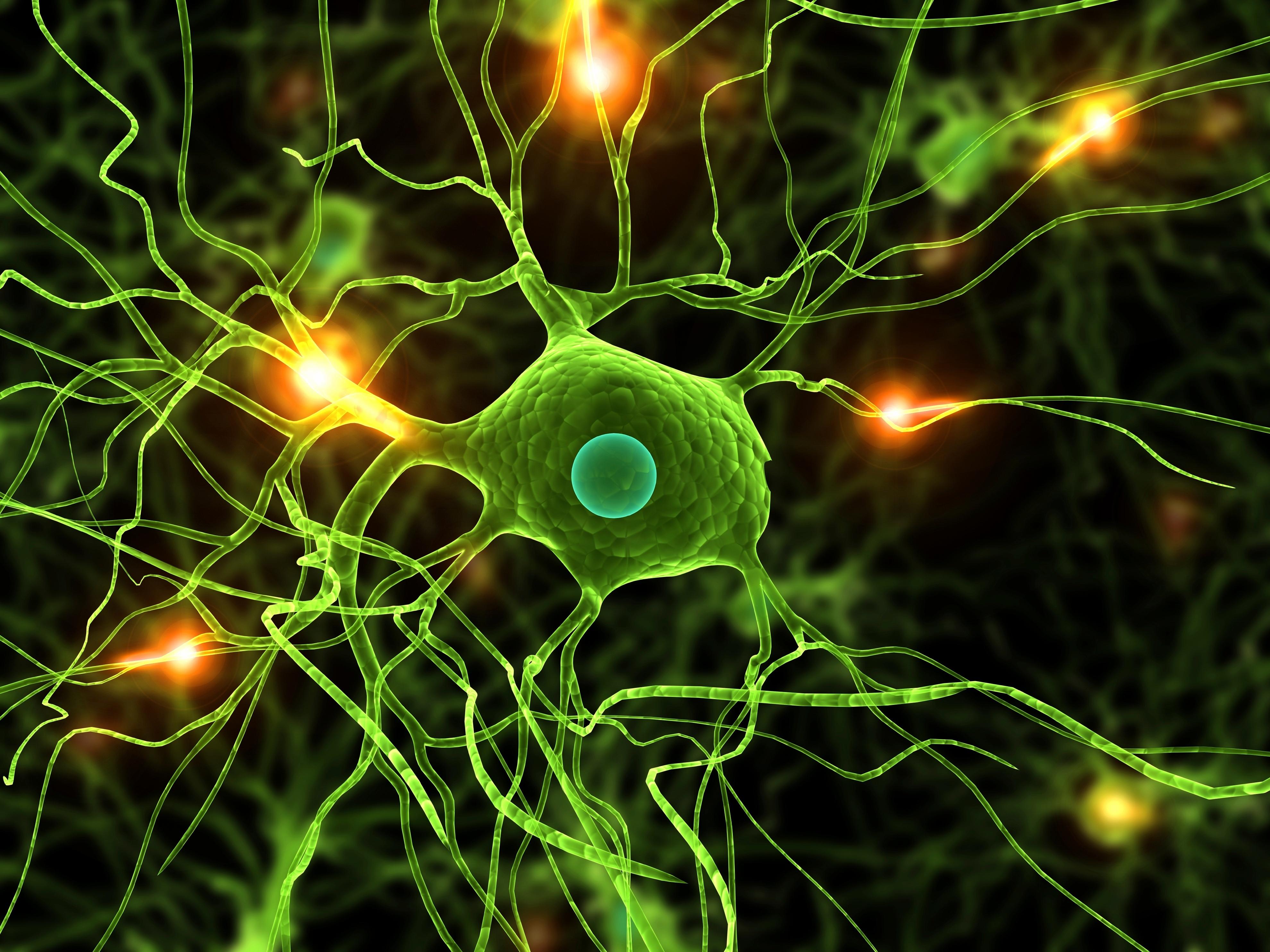 Green_Neural_Pathways.jpg