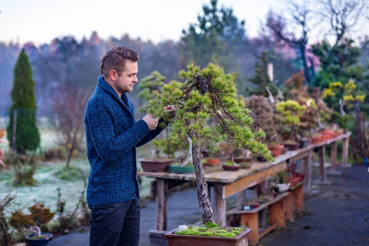 Mindfulness through pruning a Japanese bonsai tree