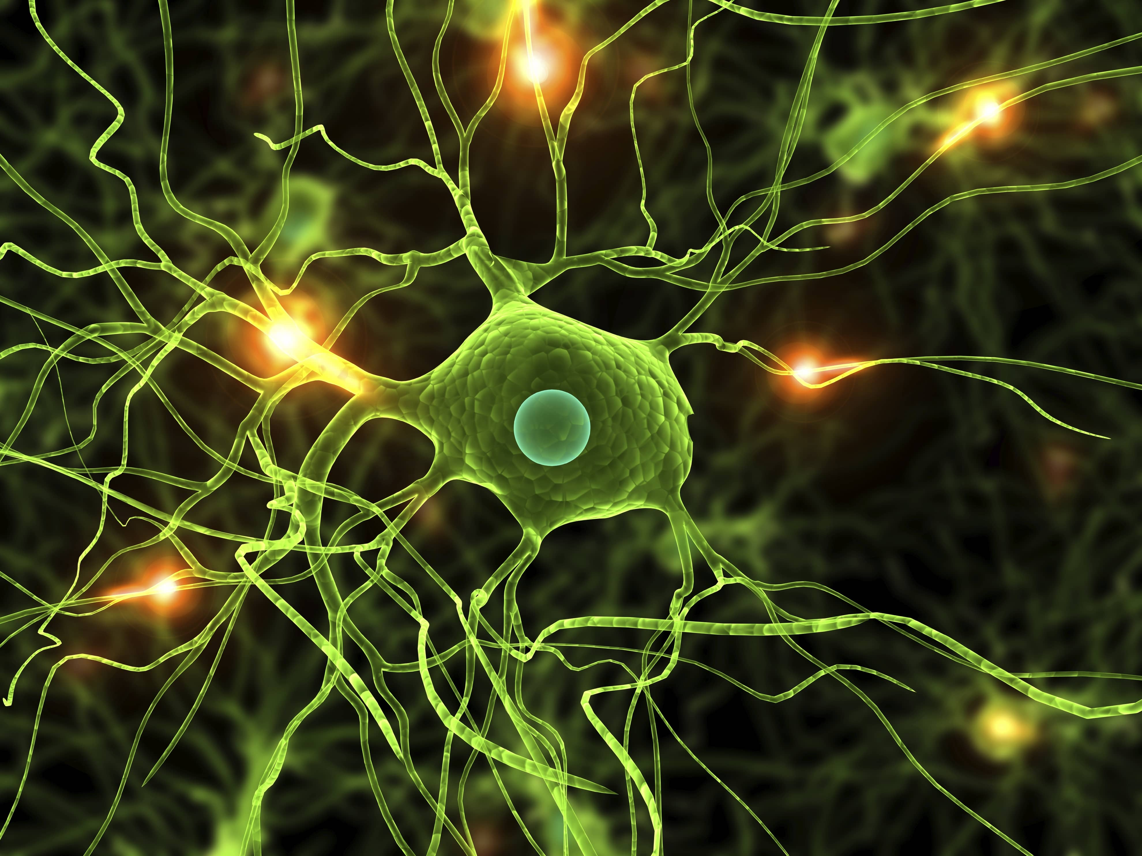 The neural pathways of the brain are a lot like our highways