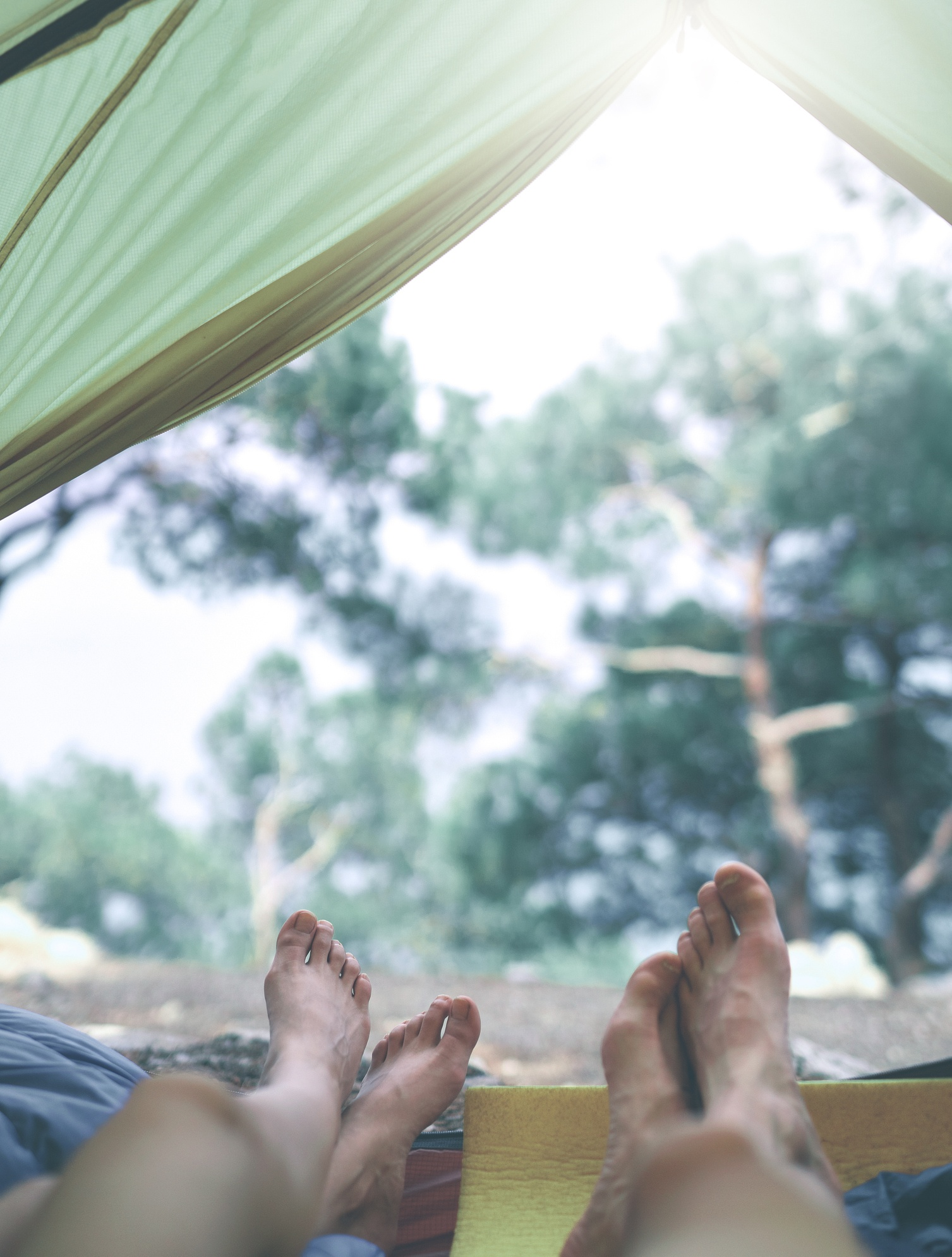 Couple viewing from inside a tent at the edge of a forest